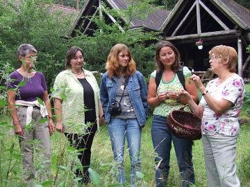 Kräuterwanderungen im Naturpark