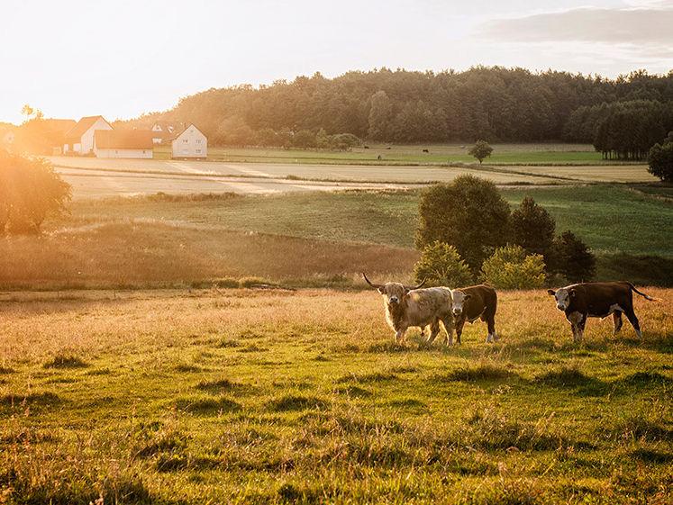 Regionale Produkte von unseren Naturparkhöfen im Naturpark Fränkische Schweiz - Frankenjura
