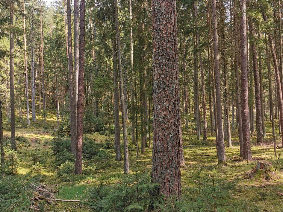 Veldensteiner Forst