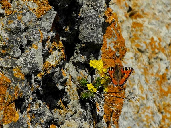 Leben rund um die fränkischen Kletterfelsen