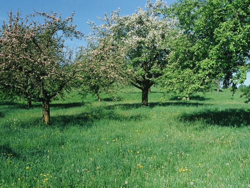Streuobstwiese im Naturpark Fränkische Schweiz - Veldensteiner Forst