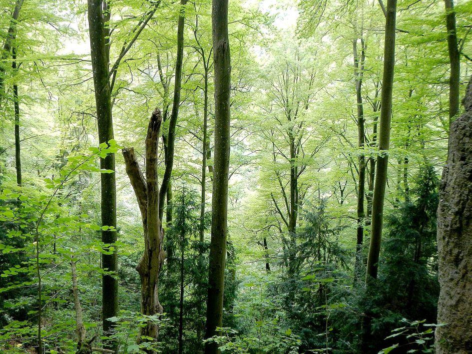 Naturwaldreservat Wasserberg bei Gößweinstein