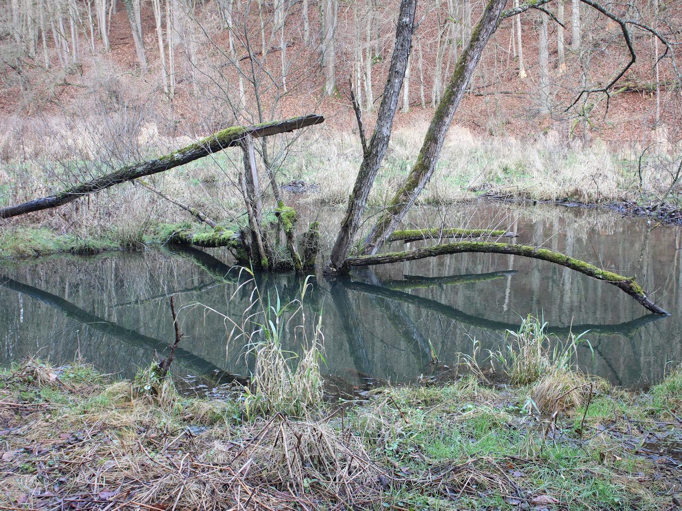 Biberrevier im Ailsbachtal, Naturpark Fränkische Schweiz – Frankenjura
