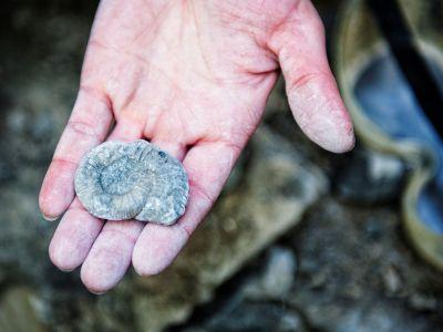 Fundstück beim Fossilienklopfen